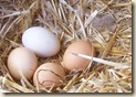 Chicken_eggs