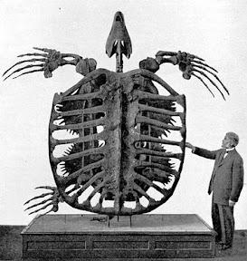 เต่าที่ใหญ่ที่สุดในโลกเท่าที่เคยมีมา