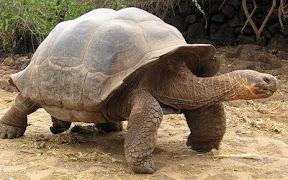 เต่าที่อายุยืนที่สุดในโลก