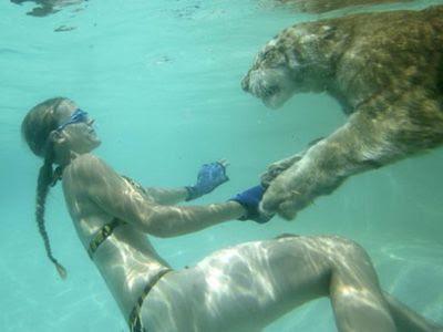 老虎是公認的貓科動物界的游泳高手,張大的腳趾能像划水的蹼一樣幫助游泳。
