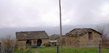 Campo d'olivo