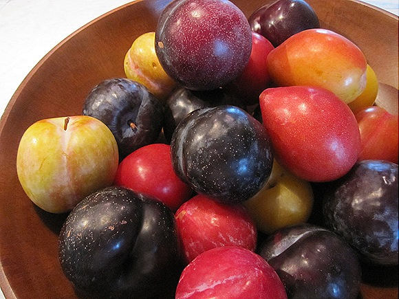 Seven Different Kinds of Plums