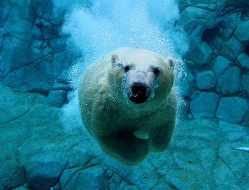 oso_agua