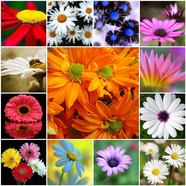 Daisy Photo Mosaic