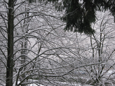 Nanaimo's First Snow of 2010