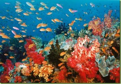 ocean-world-3D-corales-peces