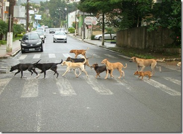 Cachorros-na-faixa