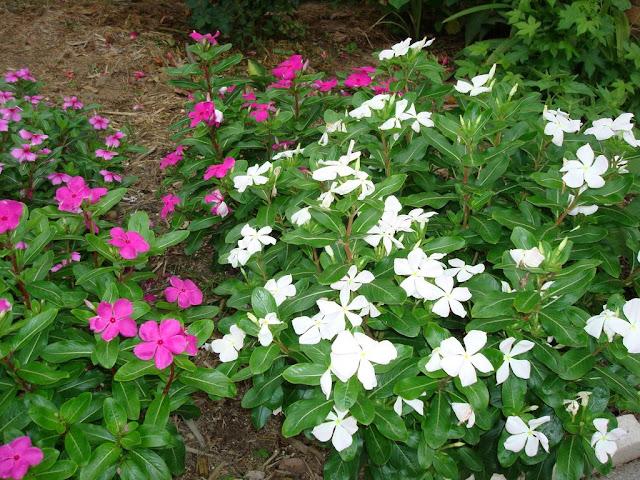Khu vườn của Na - Page 2 DSC01623