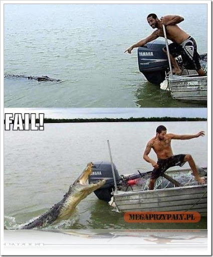 funny alligator pics