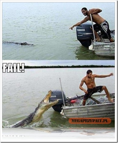 Fail Alligator Picture.