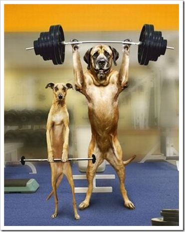 Funny photo weight - Dogs doing weight lifting.