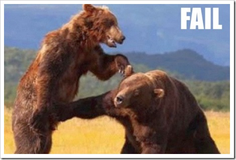 Funny Bear Fight.