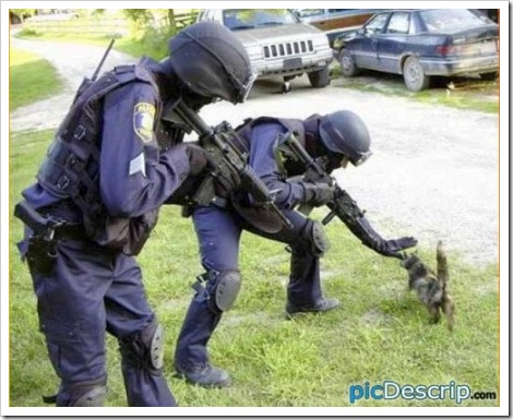 Special Forces Vs Cat.