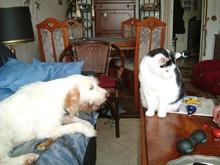 Nova_mit_ihrem_Katzenfreund