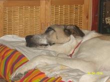 Duna y Flecha,  Mayo 2010 002