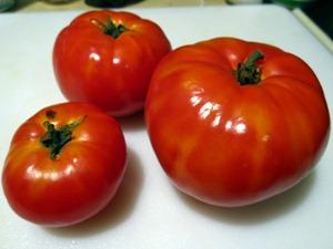 Big Beef Tomatoes