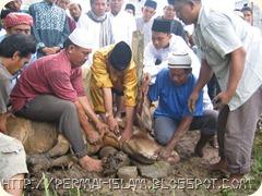 Qurban-permai