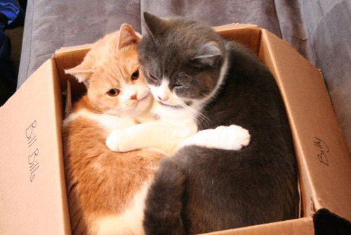 in a box.jpg