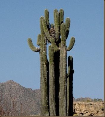McDowell MTN Saguaro & Owl