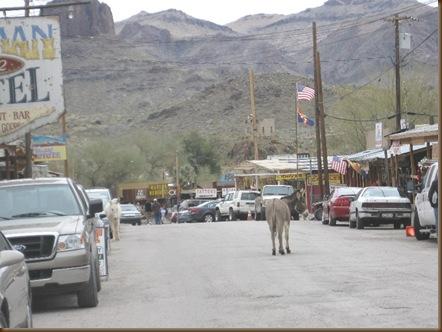 Oatman burro2