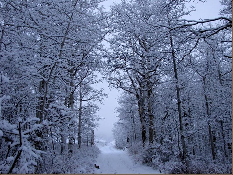 First Snowfall November2
