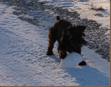 My snowball