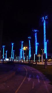 Weihnachspalmen in Las Palmas / Gran Canaria.