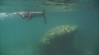 Schnorcheln bei Isla Cavada, Islas Secas.