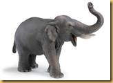 th_elephant