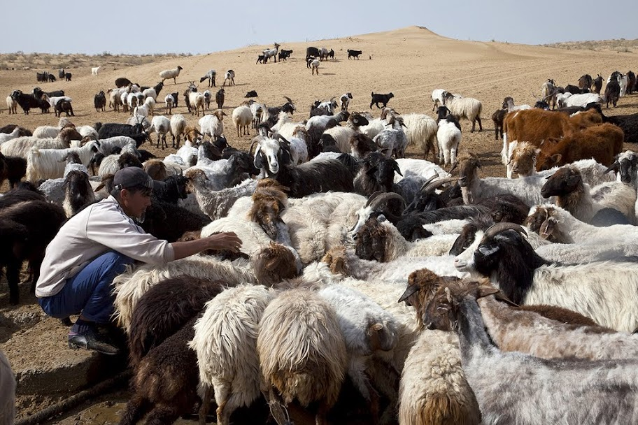 Image result for горы узбекистан пастухи