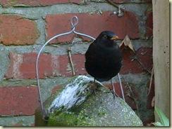 birdhouse bird