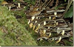 fungus 15