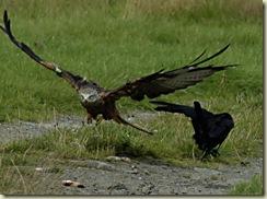 kite landing