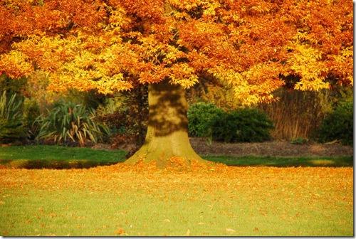 autumn_15