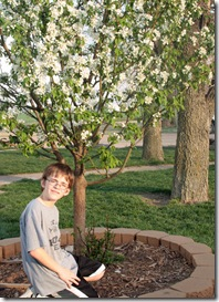 hans tree