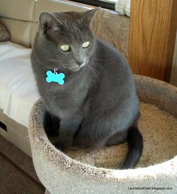 Luna on her condo.