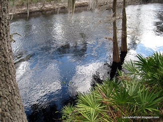 Dark Suwannee River