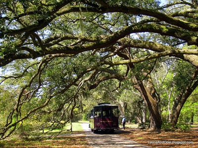 Trolley under oaks, awaiting passengers