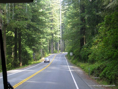 Pretty drive up 101 through the redwoods.