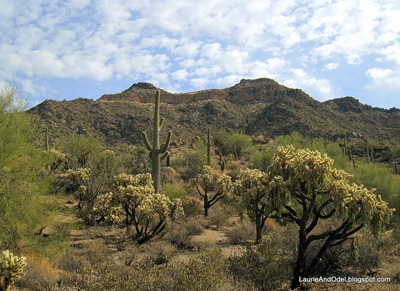 Classic desert scene at Usery Mountain Park