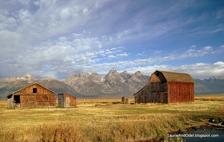 Teton Range and weathered buildings of Mormon Row in morning light.