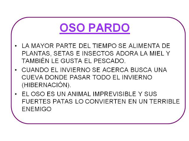 FICHAS DE OSOS Y SUS CARACTERISTICAS