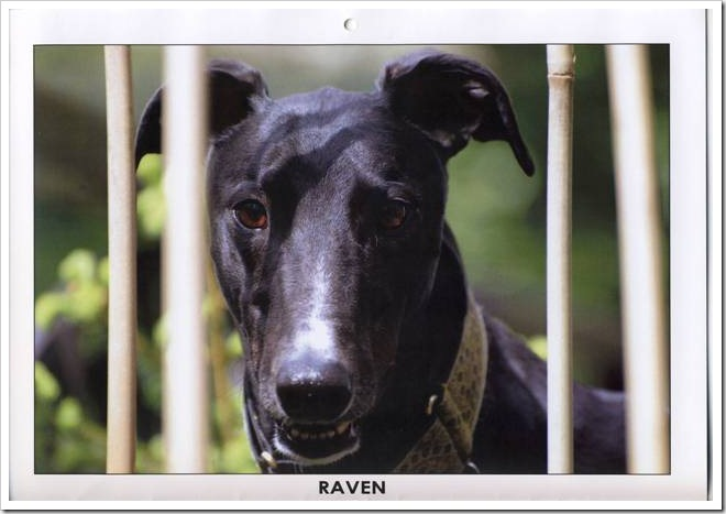 AFG 2010 Calendar Raven