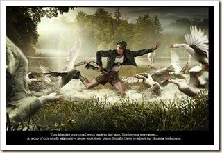 monday herons 3