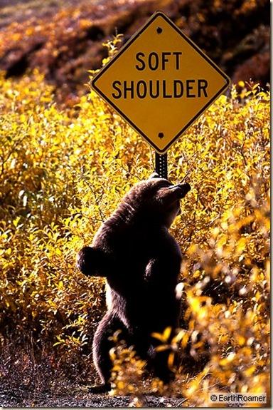 soft_shoulder_std