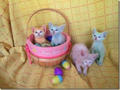 537121555_easter kittens 004