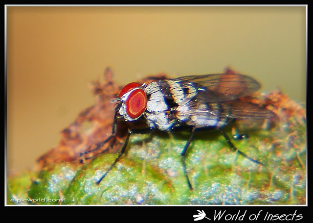 fly picture