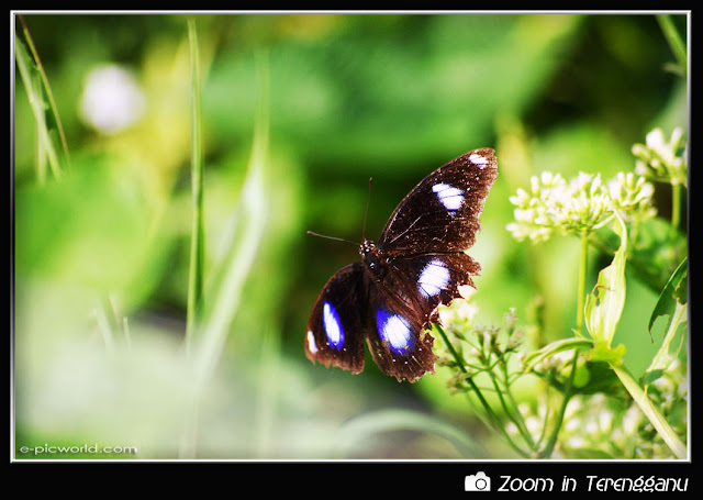 Butterfly on a plants picture