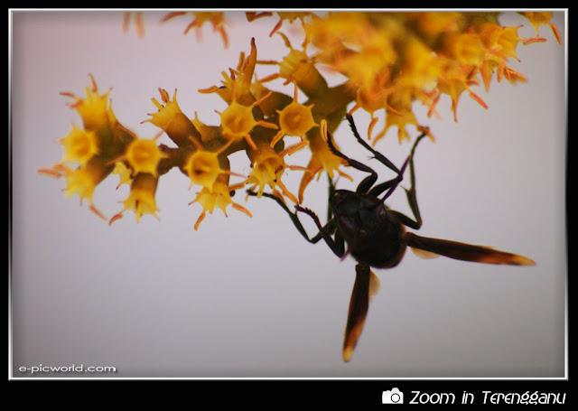 wasp sucking a flower's nectar