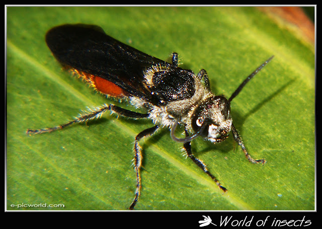 silver black wasp picture